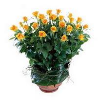 Artvin cicekciler , cicek siparisi  10 adet sari gül tanzim cam yada mika vazoda çiçek
