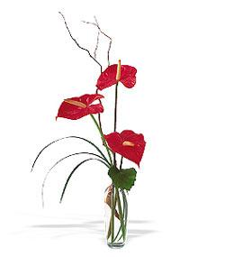 Artvin çiçek siparişi sitesi  cam yada mika Vazoda 3 adet  antoryum