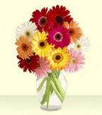 Artvin çiçek yolla , çiçek gönder , çiçekçi   cam yada mika vazoda 15 özel gerbera