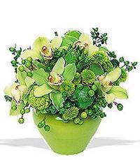 cam yada mika vazoda 5 adet orkide   Artvin online çiçekçi , çiçek siparişi