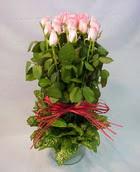 13 adet pembe gül silindirde   Artvin çiçek yolla