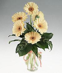 Artvin cicekciler , cicek siparisi  vazo içerisinde 11 adet gerbera çiçegi