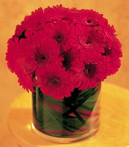 Artvin ucuz çiçek gönder  23 adet gerbera çiçegi sade ve sik cam içerisinde