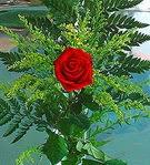 1 adet kirmizi gül buketi   Artvin çiçek siparişi vermek