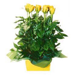 11 adet sari gül aranjmani  Artvin online çiçekçi , çiçek siparişi