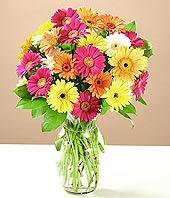 Artvin çiçek online çiçek siparişi  17 adet karisik gerbera