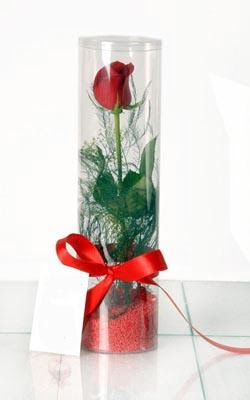 Artvin çiçek yolla  Silindir vazoda tek kirmizi gül