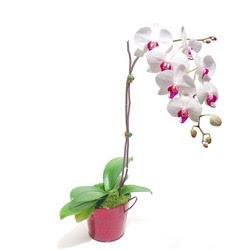 Artvin çiçek gönderme  Saksida orkide