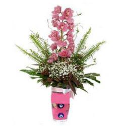 Artvin hediye çiçek yolla  cam yada mika vazo içerisinde tek dal orkide çiçegi