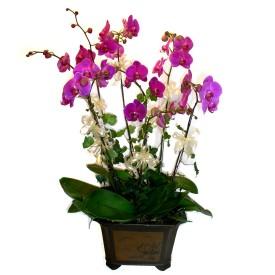 Artvin cicek , cicekci  4 adet orkide çiçegi