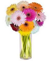 Artvin internetten çiçek siparişi  Farkli renklerde 15 adet gerbera çiçegi