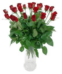Artvin çiçekçi telefonları  11 adet kimizi gülün ihtisami cam yada mika vazo modeli