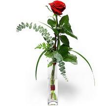 Artvin 14 şubat sevgililer günü çiçek  Sana deger veriyorum bir adet gül cam yada mika vazoda