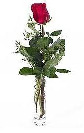 Vazo içerisinde 1 adet kirmizi gül  Artvin cicekciler , cicek siparisi