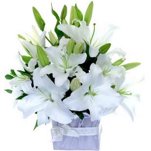 Artvin çiçek yolla  2 dal cazablanca vazo çiçeği