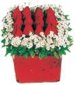 Artvin çiçek gönderme  Kare cam yada mika içinde kirmizi güller - anneler günü seçimi özel çiçek