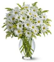 Vazo içerisinde beyaz krizantem çiçekleri  Artvin çiçekçi mağazası