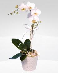 1 dallı orkide saksı çiçeği  Artvin online çiçekçi , çiçek siparişi
