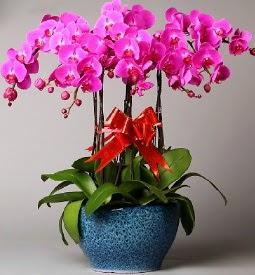 7 dallı mor orkide  Artvin çiçek online çiçek siparişi