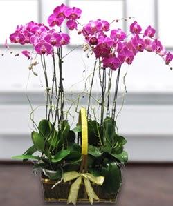 4 dallı mor orkide  Artvin güvenli kaliteli hızlı çiçek