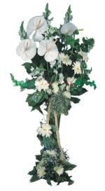 Artvin çiçek mağazası , çiçekçi adresleri  antoryumlarin büyüsü özel