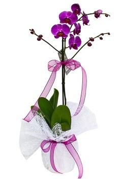 Tek dallı mor orkide  Artvin çiçekçi telefonları