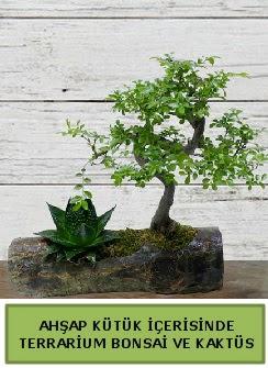 Ahşap kütük bonsai kaktüs teraryum  Artvin internetten çiçek siparişi