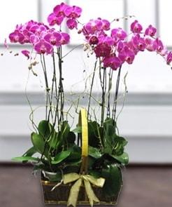 7 dallı mor lila orkide  Artvin çiçek gönderme sitemiz güvenlidir