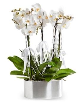 Beş dallı metal saksıda beyaz orkide  Artvin çiçek yolla