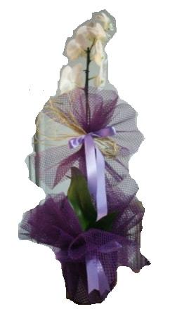 Tek dallı beyaz orkide süper kalite ithal  Artvin çiçek siparişi sitesi