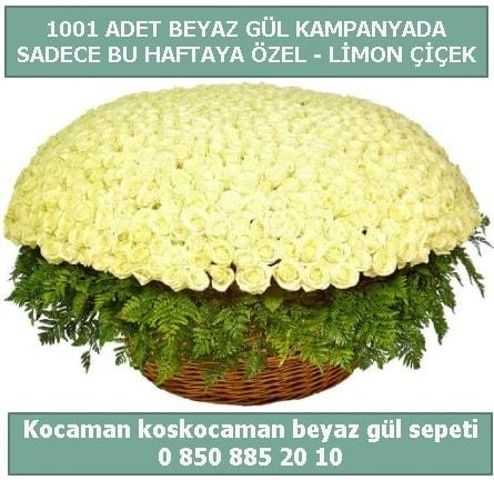1001 adet beyaz gül sepeti özel kampanyada  Artvin çiçek gönderme sitemiz güvenlidir