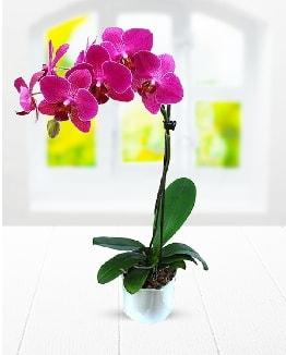 Tek dallı mor orkide  Artvin çiçek satışı