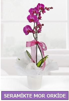 Seramik içerisinde birinci kalite tek dallı mor orkide  Artvin İnternetten çiçek siparişi