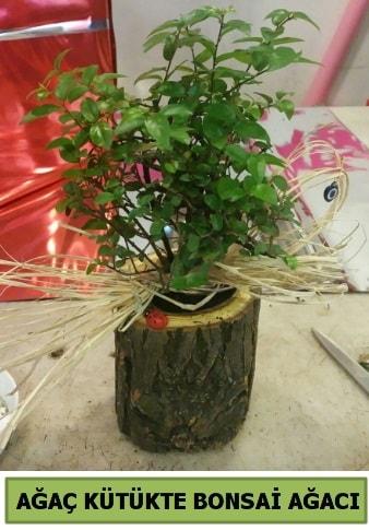 Doğal ağaç kütük içerisinde bonsai ağacı  Artvin çiçek gönderme sitemiz güvenlidir
