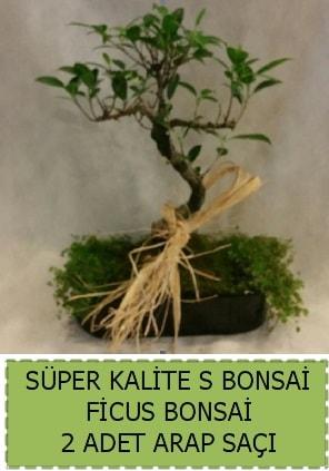 Ficus S Bonsai ve arap saçı  Artvin çiçekçi telefonları