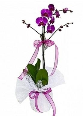 Tekli Mor Orkide  Artvin çiçek yolla