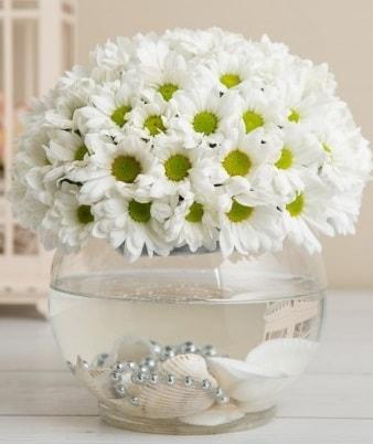 Fanusta beyaz Papatya  Artvin çiçek satışı