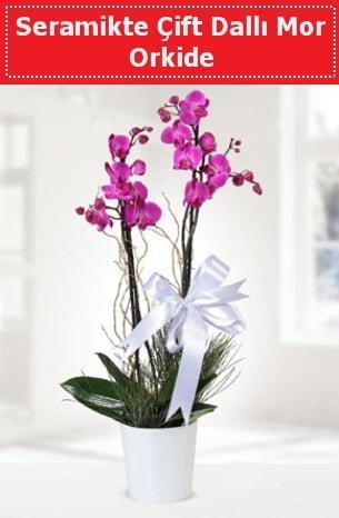 Seramikte Çift Dallı Mor Orkide  Artvin anneler günü çiçek yolla