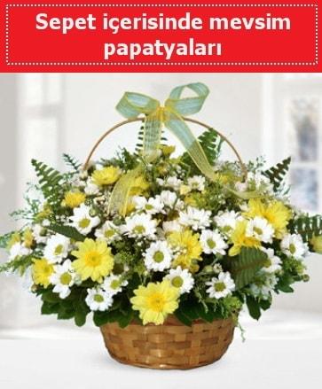 Sepet içerisinde mevsim papatyaları  Artvin ucuz çiçek gönder